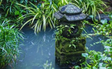 Best Pond Plants