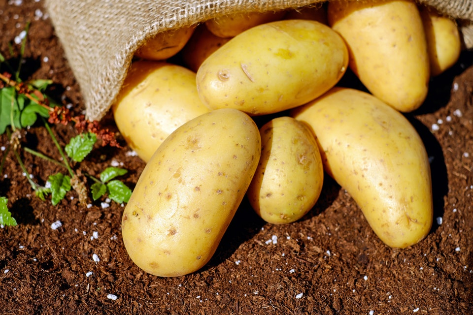 How To Grow Potatoes Step By Step From Summer To Fall