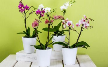 How To Care For Your Orchids In The Home