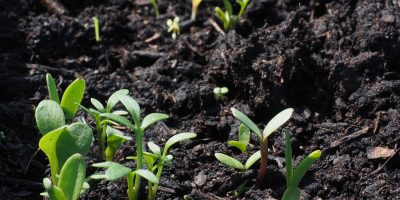 What are Acid-Loving Plants That Grow in Acidic Soil