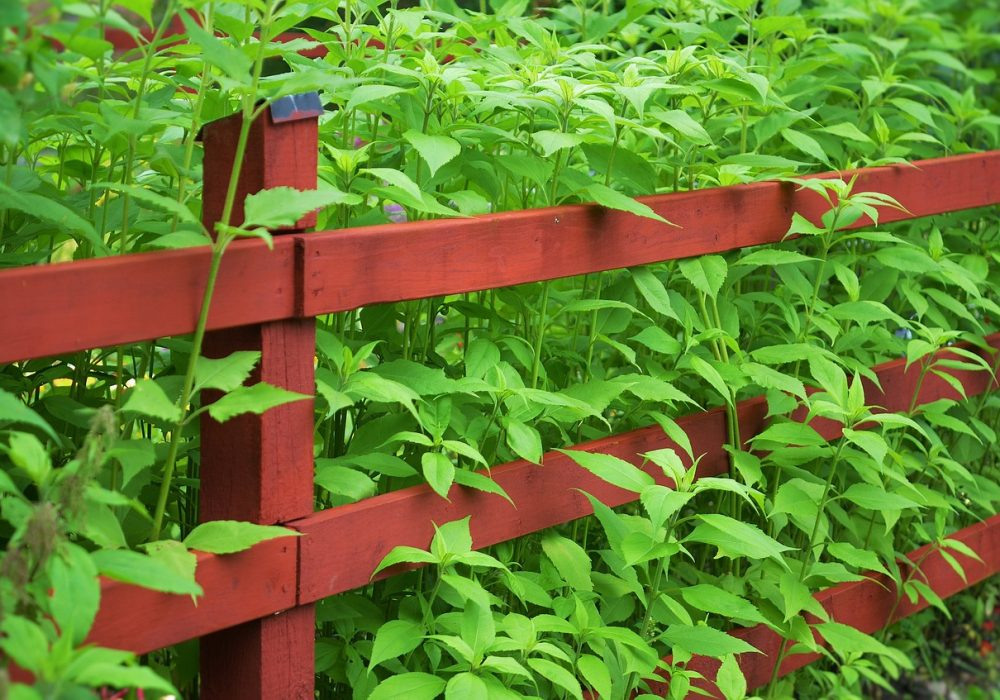Fast-Growing Hedge Plants For Privacy To Grow