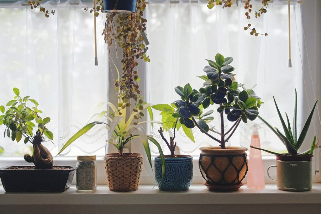 Common House Plants For Small Space