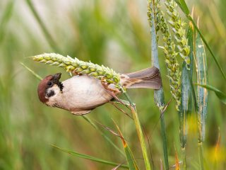 How to prevent birds from eating grass seed