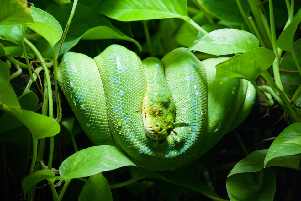 Plants that repel snakes away